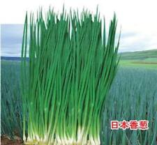 Japan alone root vegetable nutrition small shallot Spring onion seeds 100Pcs/Lot