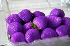Viola FRUTTI FRAGOLA FRAGOLE SEMI 500+ semi-UK STOCK -
