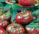 TOMATO Black Krim 35+ seeds ORGANIC heirloom HUGE fruit vegetable garden UNUSUAL