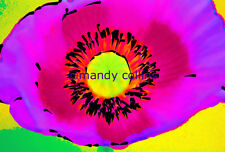 Fine Art Photography 'Bright Pink Poppy' by Mandy Collins flower abstract