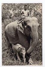 ELEPHANTS belle eléphante de l'inde et son petit