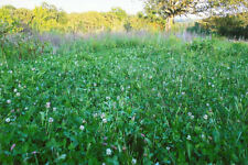 4 pound Johnson's Premium Perennial Chicory and Clover 1/2 acre Food Plot Seed