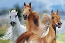 THREE HORSES POSTER - 24x36 LANGRISH NATURE HORSE 5523