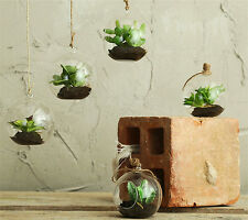 REAL TOUCH mini succulents in glass bubble - DA0016
