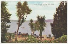 Lake From Dinas Cottage Killarney Ireland Vintage Postcard 312a
