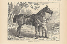 EQUESTRIAN MAN WITH HORSE EQUINE ANTIQUE  ART PRINT 1873