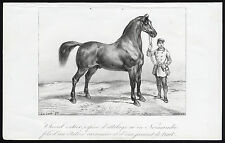 Antique Print-DRAFT HORSE-STALLION-NORMANDY-Journal des Haras-La Coste-1845