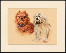 BRUSSELS GRIFFON AND MALTESE DOGS LOVELY DOG PRINT MOUNTED READY TO FRAME