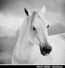 White Arabian Horse Plexiglass Fine Art Print Home Decor Large 60cm X 60cm