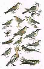"Jonston - Merian Birds - ""SMALL BIRDS - PAGE 42"" - Hand-Colored Engraving -1657"
