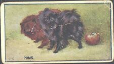Hill - Breeds of Dogs, Hill's Badminton back - 12 - Poms