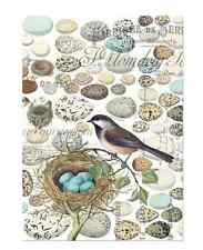 NEST and EGGS Cotton Kitchen Towel by  Michel Design Works