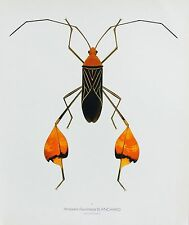 Durin Print LEAF-FOOTED BUG/Bugs! Insects Litho L@@K!