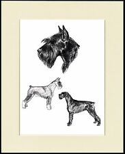 GIANT SCHNAUZER LOVELY DOG SKETCH PRINT MOUNTED READY TO FRAME