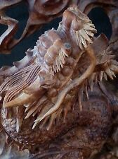 Outstanding Chinese carved Dragon sculpture from natural burlwood root formation