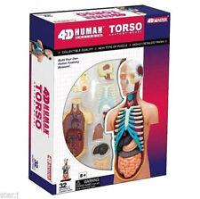 3D Model Body Model 4D Puzzle Body Torso 32pcs Human Anatomy 3D Study Bone Model