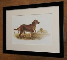 Golden Retriever print -12''x16'' frame - Joel Kirk prints, joel kirk dog print