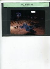 P223 # MALAYSIA USED PICTURE POST CARD * TURTLES AT RANTAU ABANG