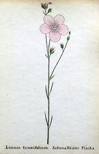 LINUM TENUIFOLIUM  Alpine Flower Weber Original Antique Botanical Print 1872