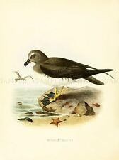DRAWING BIRD ROWLEY KEULEMANS CHATHAM TAIKO ART PRINT POSTER LAH343A