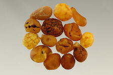 Lot of 14 Natural Raw Rough Drops Nugget Genuine BALTIC AMBER 18.1g s170223-18