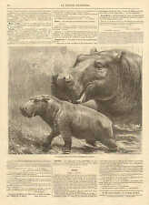 Momma & Baby Hippo, In London Zoo, Vintage 1872 French Antique Art Print, CUTE