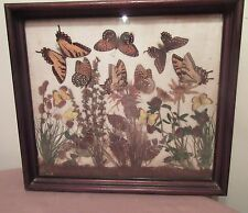 antique handmade natural real framed taxidermy butterflies flowers collage art