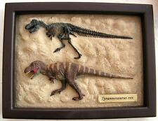 T-REX Dinosaur Model - skeleton & flesh on framed model