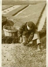 """Toilette du Jardin des Tuileries 1932"" Photo originale G. DEVRED / Agce ROL"