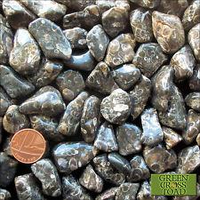 1 x Turitella Agate Tumblestone Healing Reiki Crystal Fossil Elimia Tenera