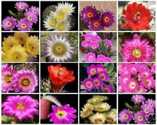 Echinocereus variety mix exotic flowering cacti color rare cactus seed 100 SEEDS