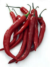 Cayenne Long Red Thin Pepper *Heirloom* Non-GMO  (50 Seed's)