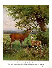 W. Arnold aquarelle l'été en grand gibier commissariat chevreuils histor. monts graphique 1930