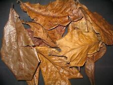 Amy's 1 kg Grade D INDIAN ALMOND CATAPPA LEAVES -VIA SEAMAIL - TAKES 3 MONTHS