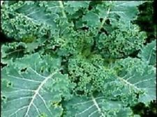 Double Seeds Kale - SIBERIAN Blue-Green Frill Leafed & CAVOLO NERO Black Cabbage