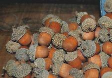 Bag of 70 Wood Acorns w/ Real Acorn Caps - Bowl Fillers -- FREE SHIPPING