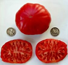 Jefferson Giant - Organic Heirloom Tomato Seeds - Rare Beefsteak - 40 Seeds