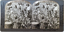 Keystone Stereoview of Blacks Picking Cotton in GEORGIA from the 1920's 200 Set