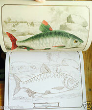 2015 FISH/Fishes COLORING BOOK! Lizars/JARDINE 96 pages/Paper BRAND NEW L@@K!