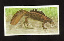 Great Crested Newt--1990 Brooke Bond Tea Card--Issued in England