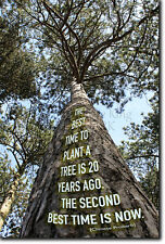 THE BEST TIME TO PLANT A TREE QUOTE POSTER PHOTO PRINT ART MOTIVATION