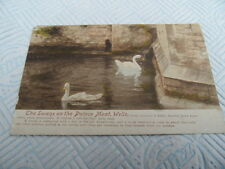 SWANS ON PALACE MOAT WELLS SOMERSET SEPIA PHOTOGRAPH VINTAGE POSTCARD 011