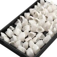70Pcs Diente Dentadura Modelo Dental Temporal Corona Carillas De Resina Caja Hot