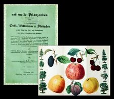 1861 Obstbau Äpfel Kirschen Obst Baumzucht Atboriculture kolor. 1 Litho Meyer