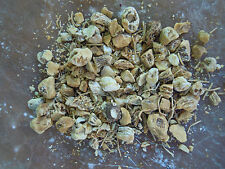 Solomon's Seal Root herb Wicca/Pagan/Spell Supplies/Herbs/Incense witchcraft