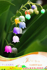100 Pcs LILY of the VALEY CONVALLARIA MAJALIS PARENNIAL_ RARE Color Flower Seeds