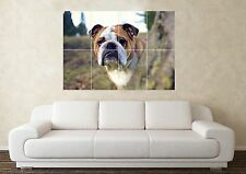 Large English Bulldog Dog Crufts Pedigree Wall Poster Art Picture Print