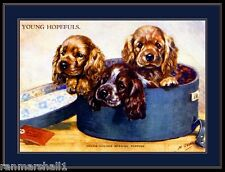 English Print Cocker Spaniel Puppy Dog Art Picture