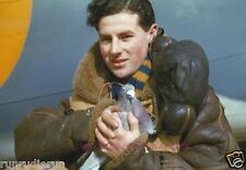 BRITISH RAF CREW MEMBER HOLDS CARRIER PIGEON - 1942, WWII REPRINT PHOTO