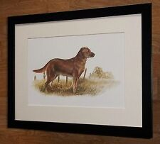 Dog prints, set 4 -12''x16'' frame - Framed Joel Kirk  dog wall art